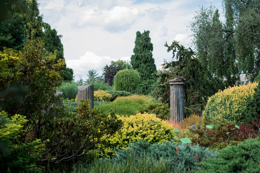 variety of green plants and trees in a garden