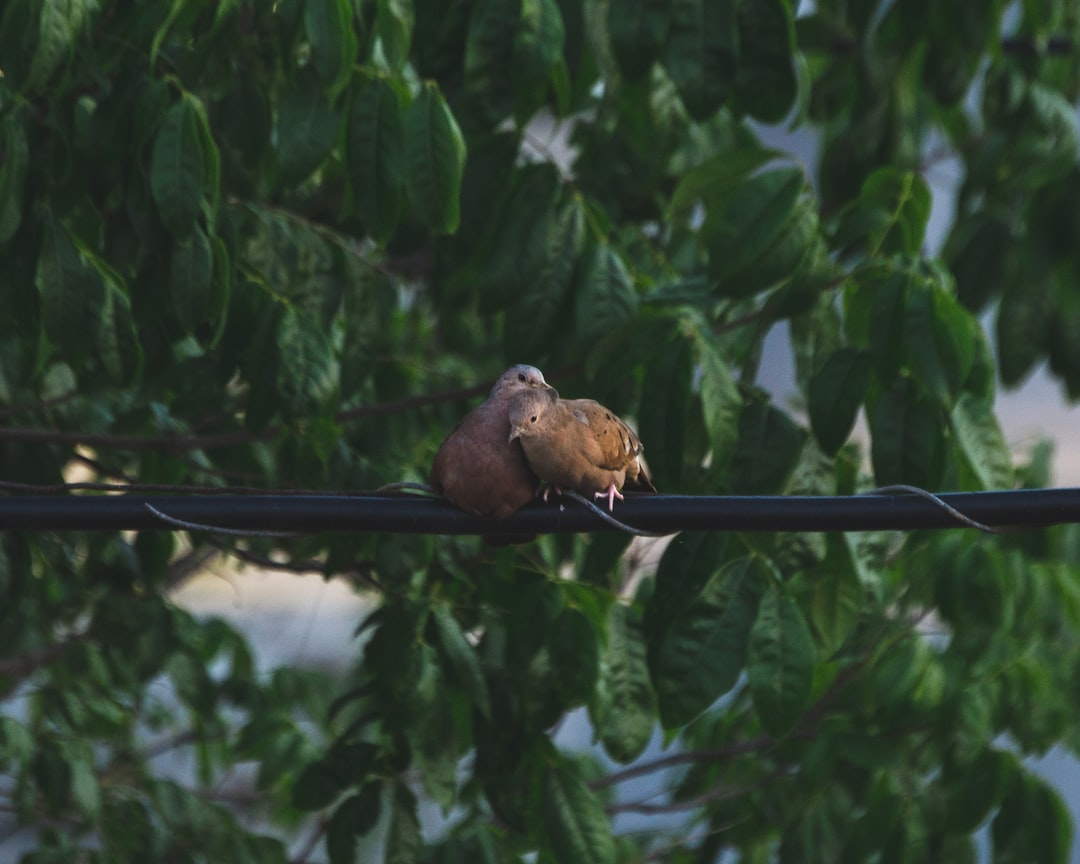 Two turtledove hugging each other