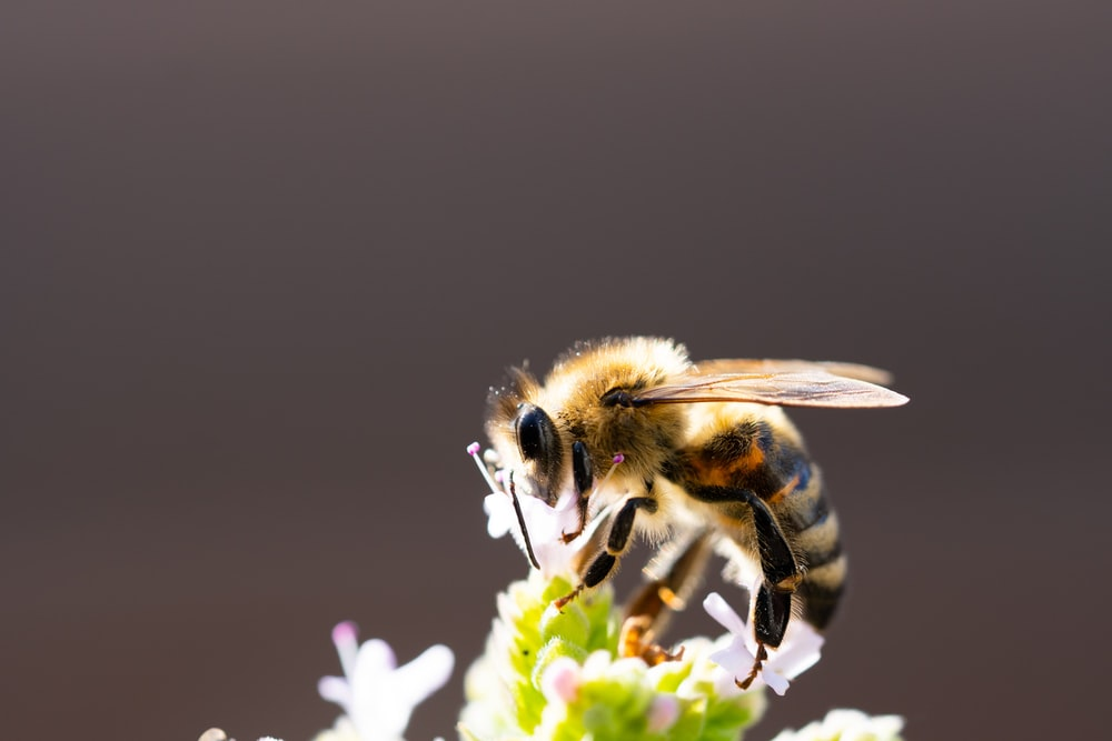 shallow focus photo of bee