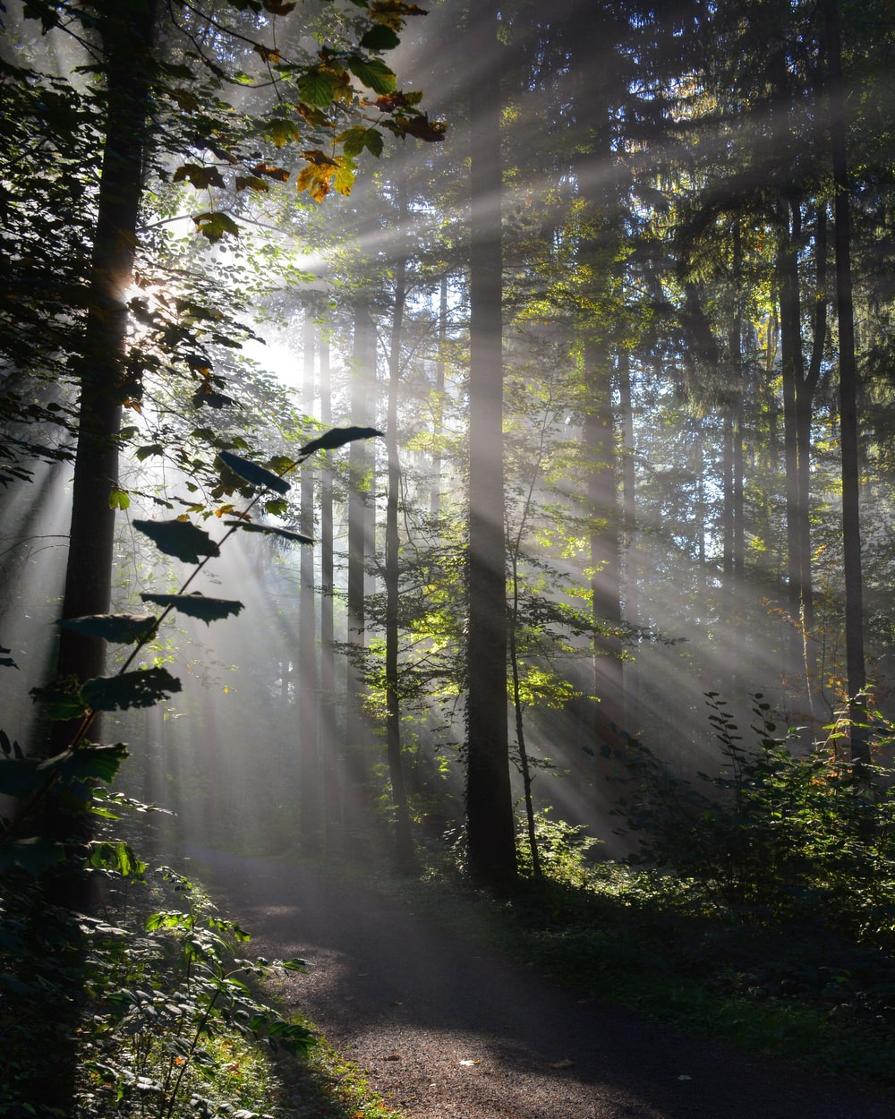 sunlight reflecting on trees in the forest
