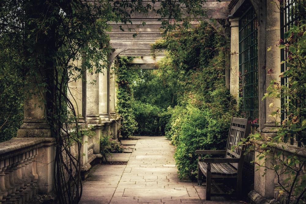 bench beside hedges