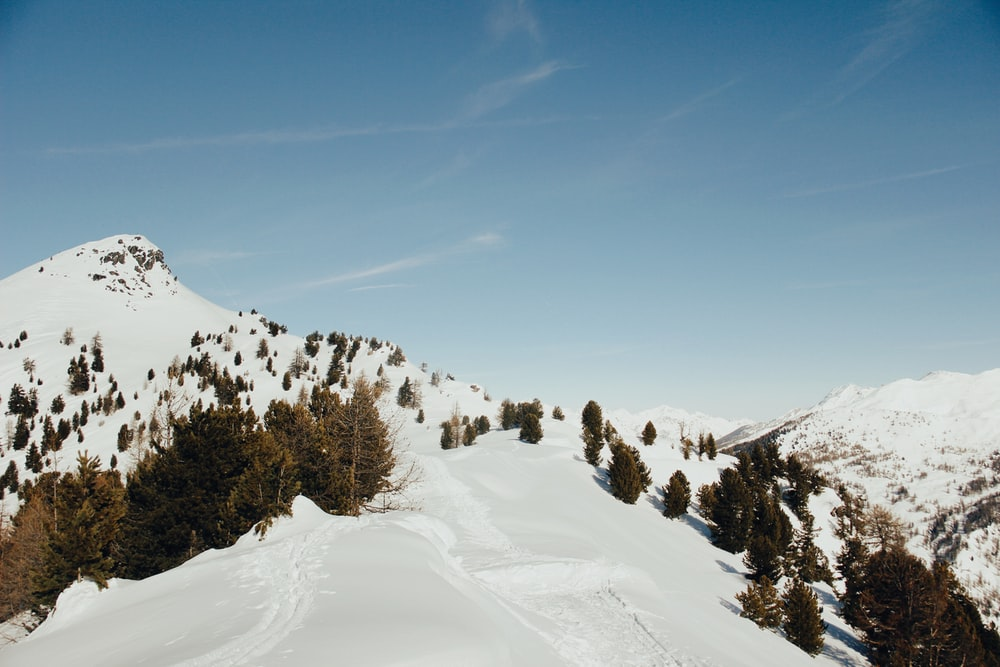 trees on snow-covered mountain under blue sky