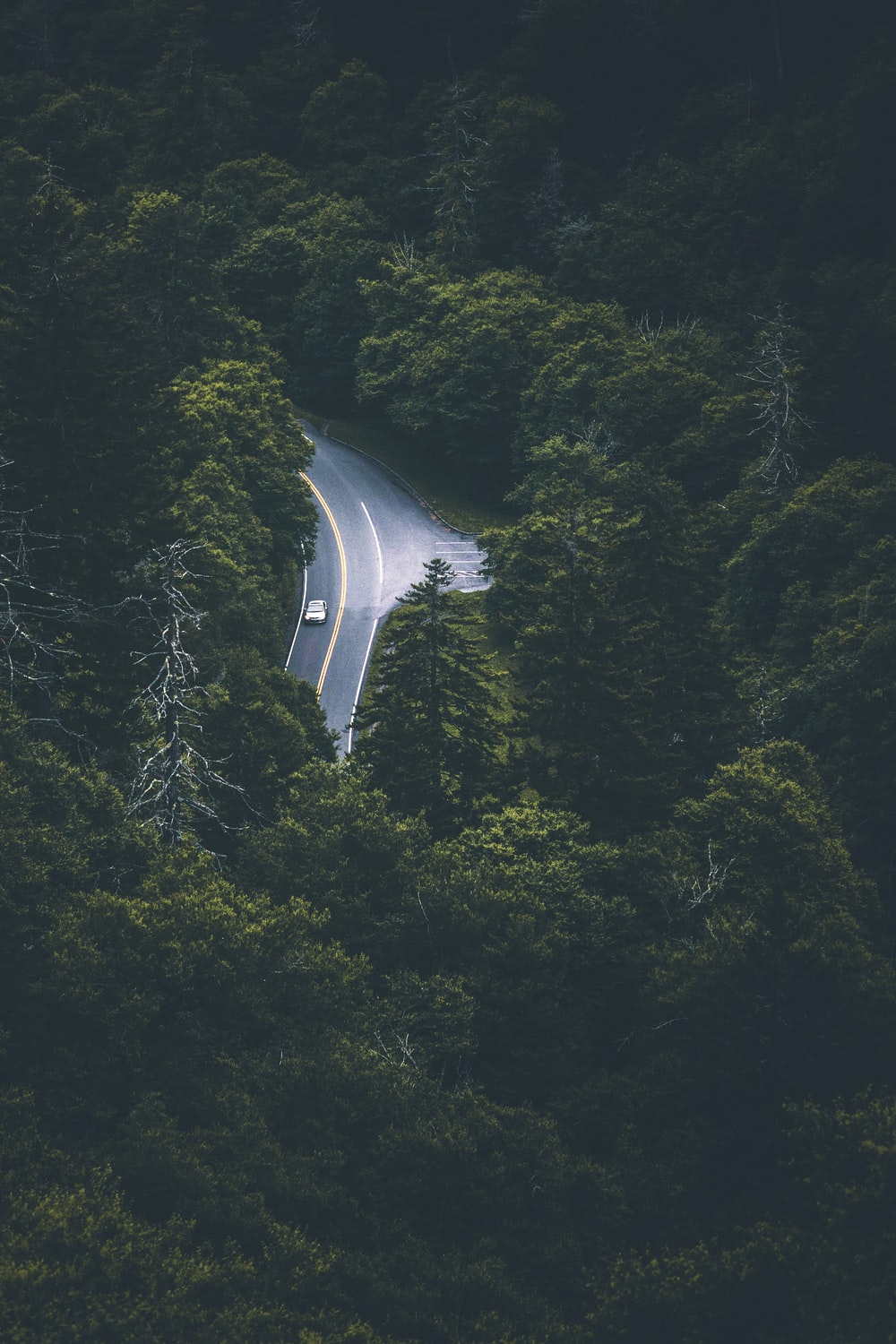 aerial photo of green trees near road