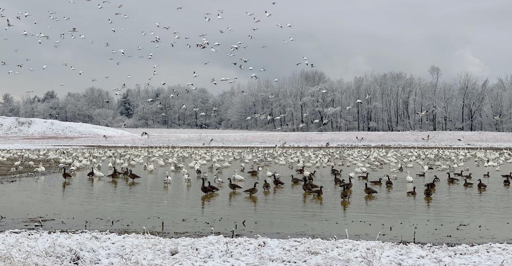 flock of birds in body of water