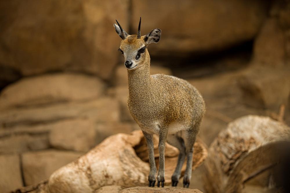 shallow focus photo of brown animal