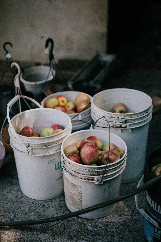 buckets of apples
