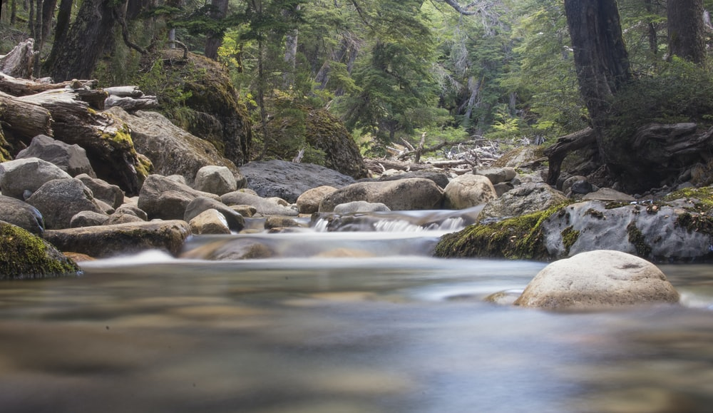timelapse photo of water flowing on rocks between trees