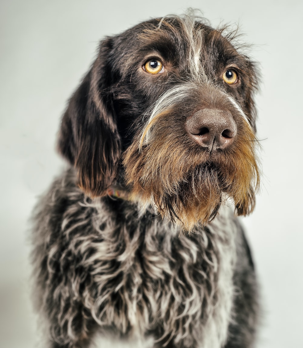 focus photography of a long-coated black and brown dog