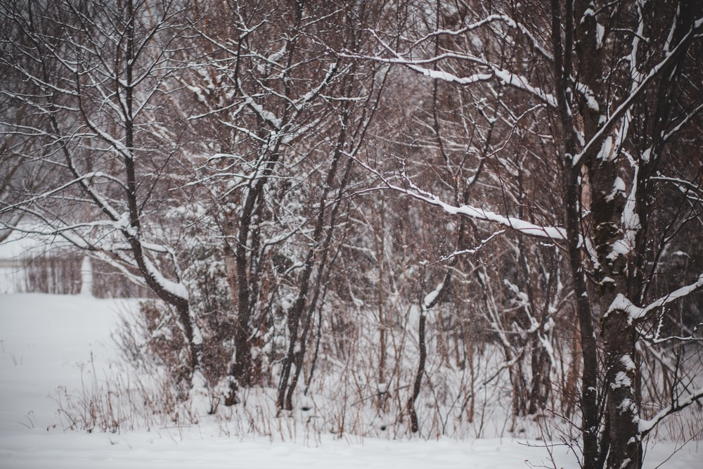 bare trees on snowy ground