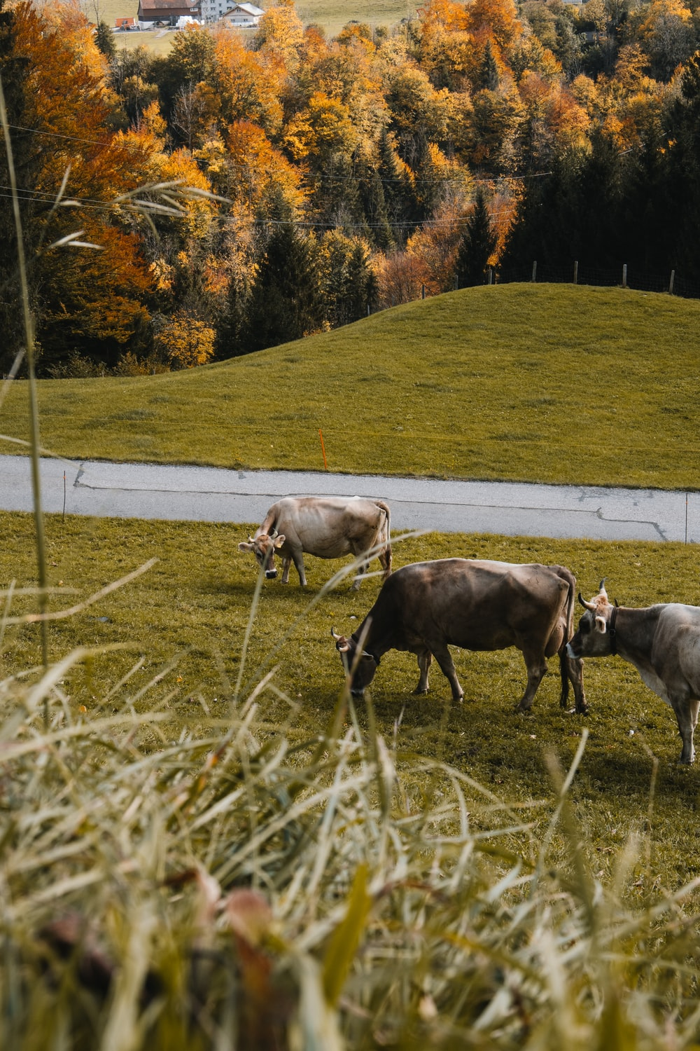cattle on green field surrounded with green trees