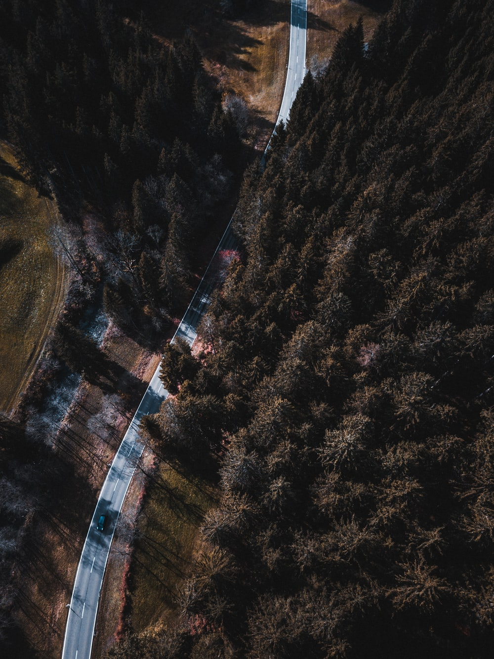 road and forest during day