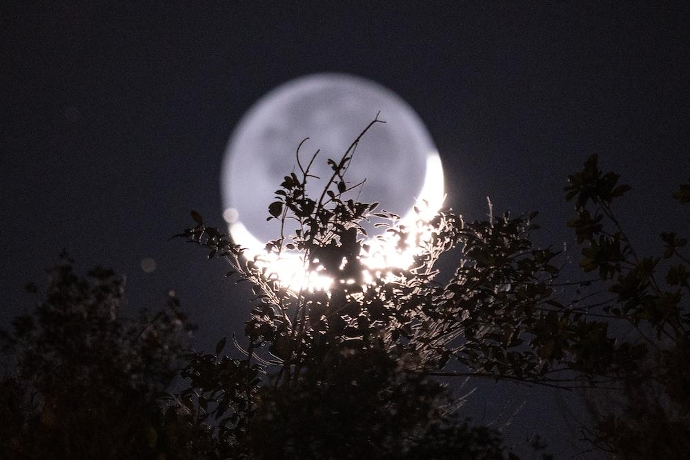 photograph of moon
