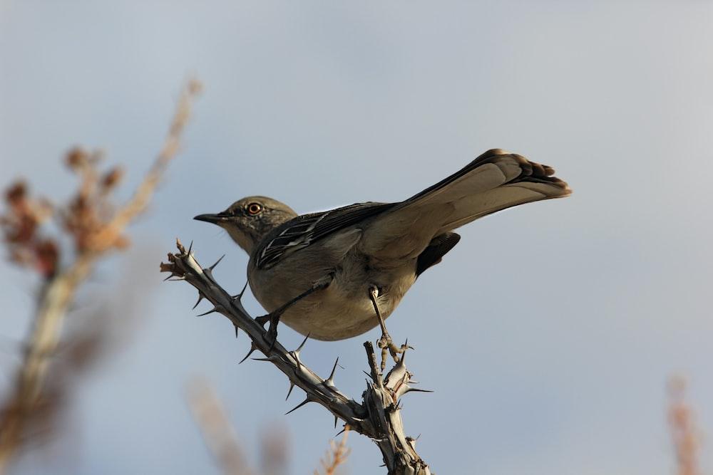 bird on thorny stem