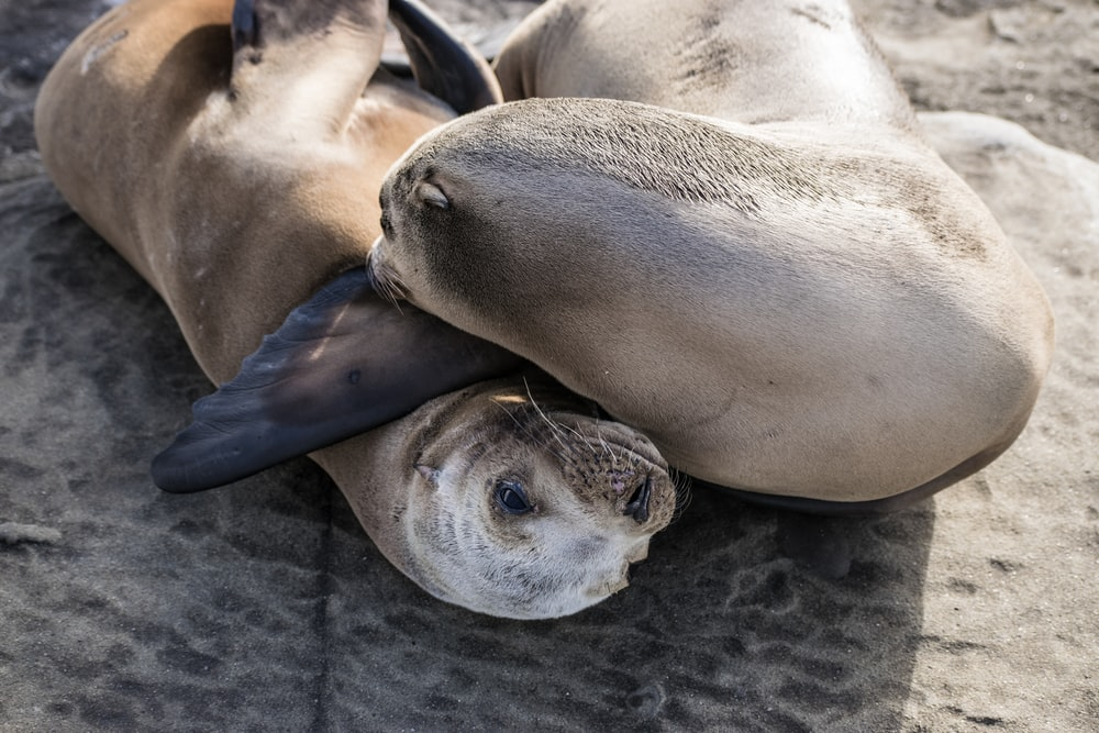shallow focus photo of gray seal