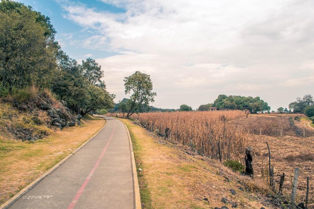 gray road near trees beside hill