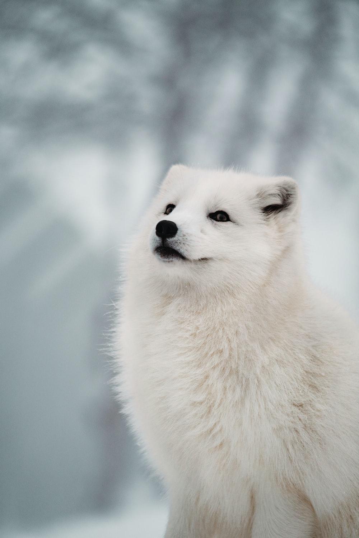shallow focus photo of long-coated white dog