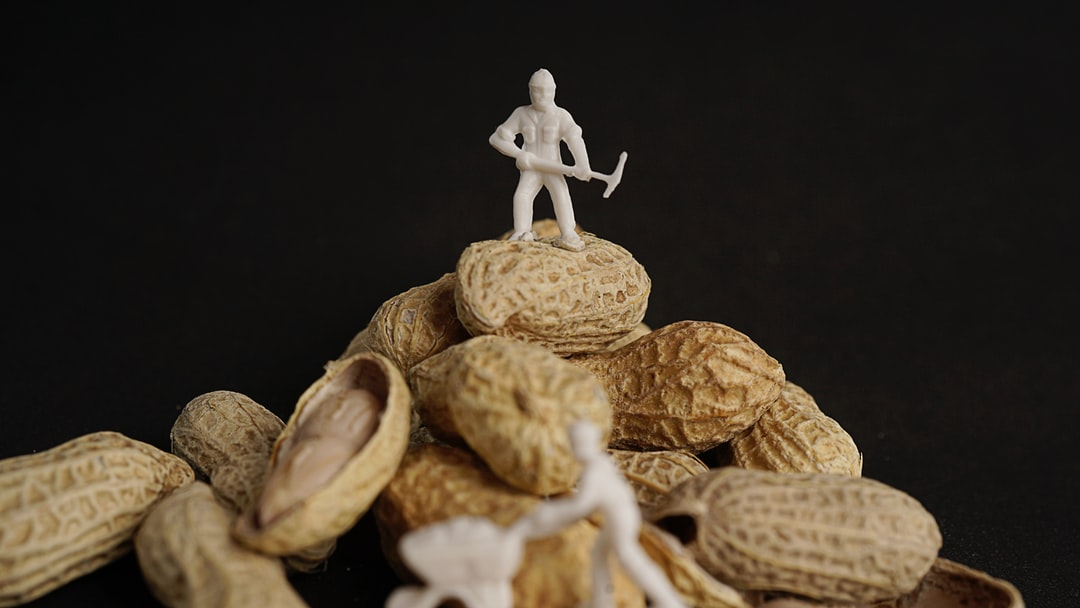 Creative concept with miniature people. Workers chopping nuts. open peanut on black background