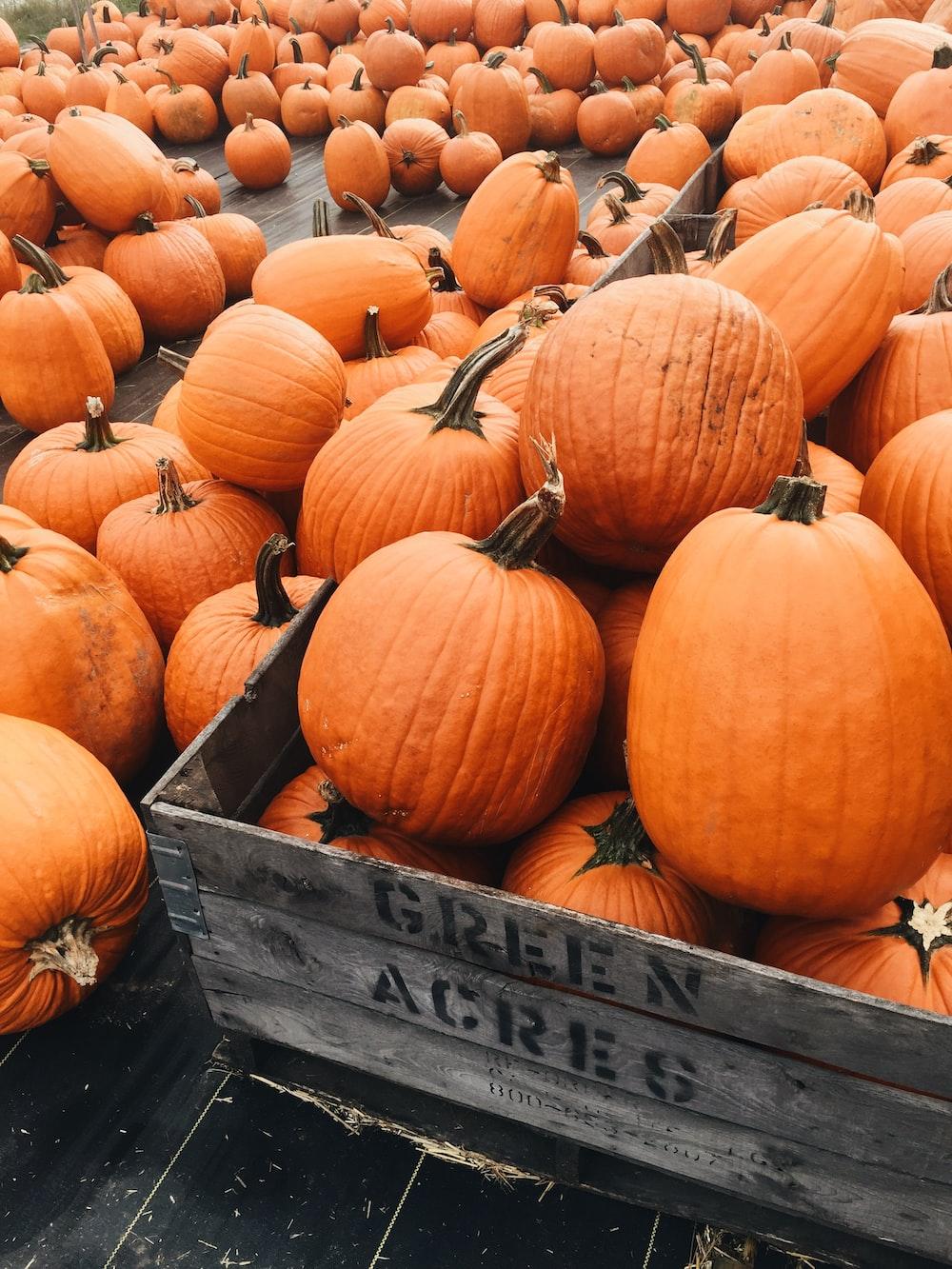 shallow focus photo of orange pumpkins