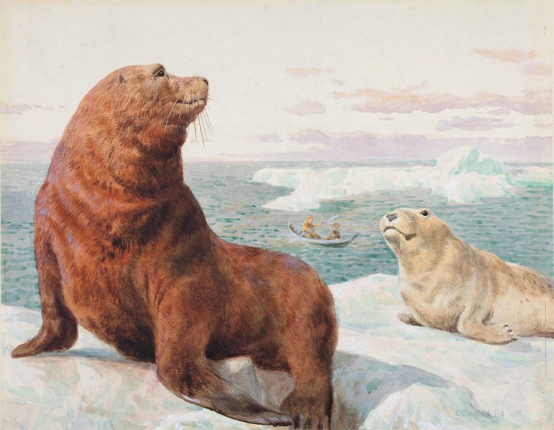 Sea Lions, By Charles Collins Ii - unsplash