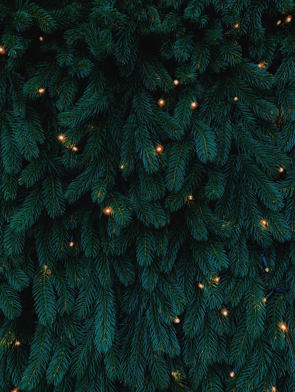 green Christmas tree with lights