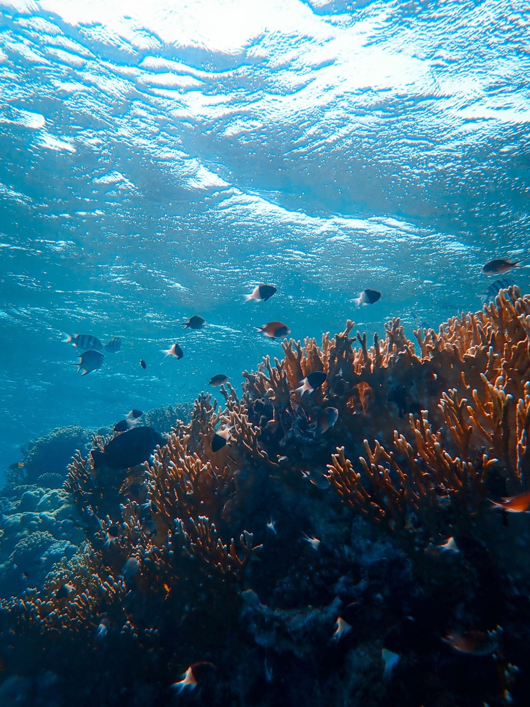 underwater photography of fishes beside coral reefs