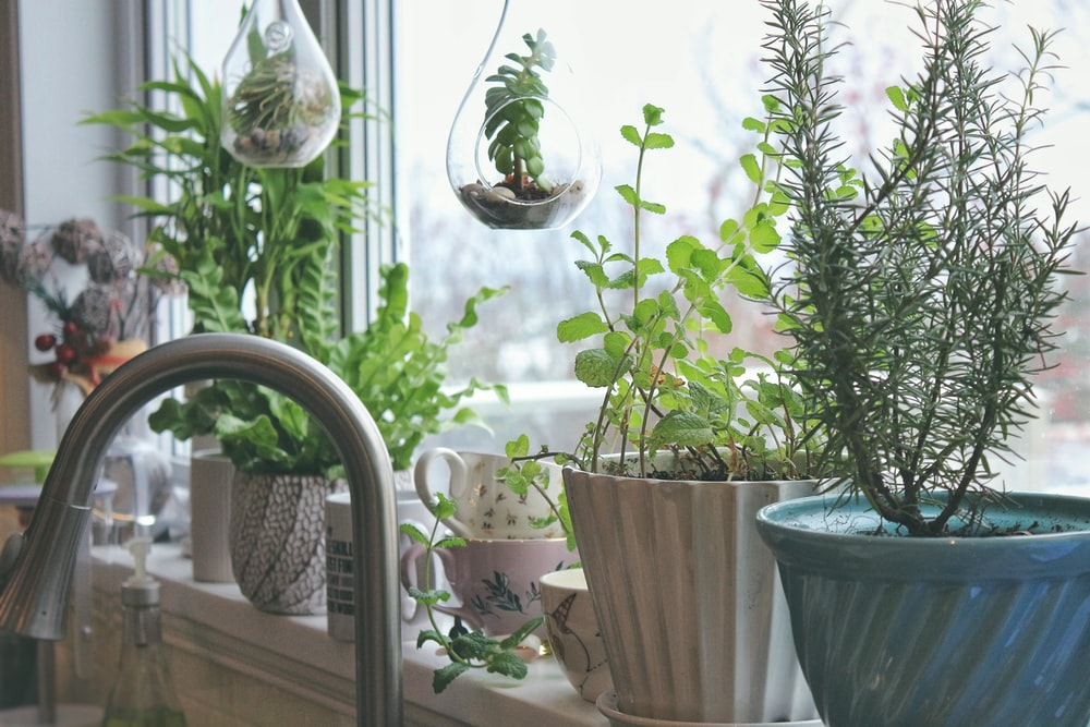 green-leafed potted plants placed by the window