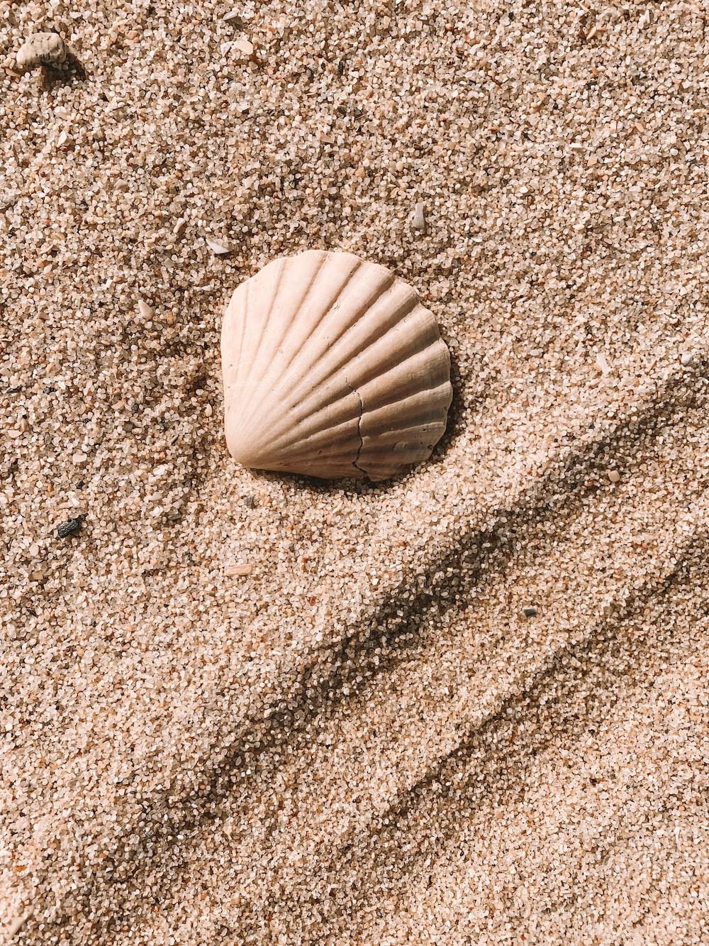 white seashell on sand