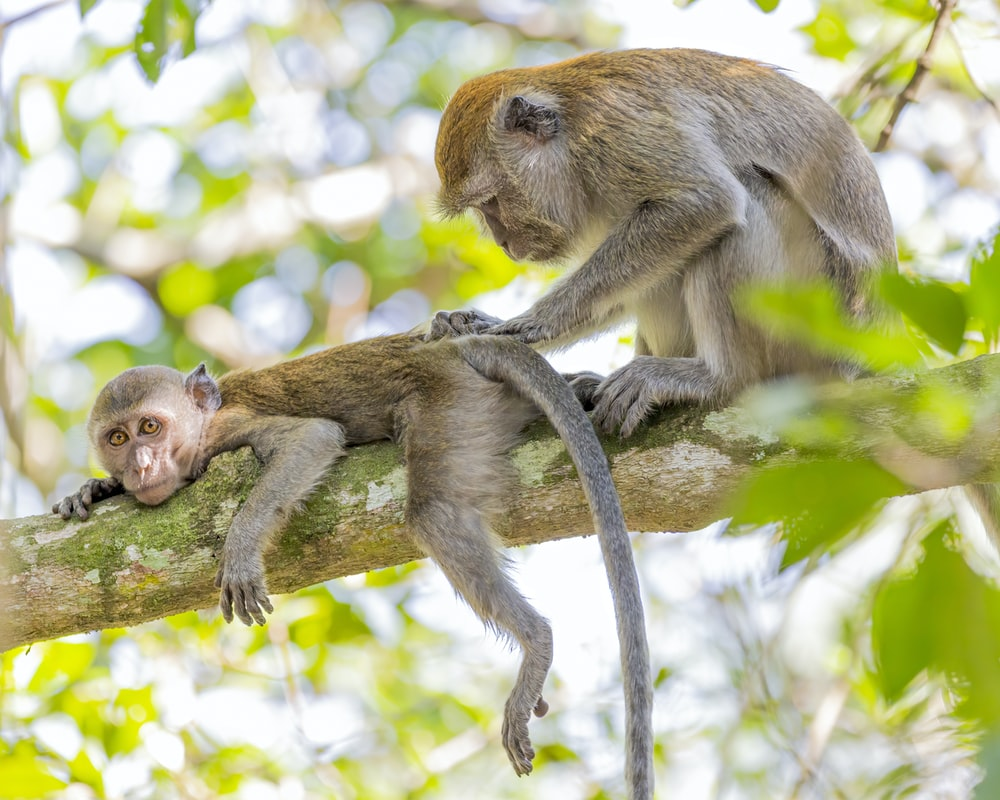 500 Cute Monkey Photo Pictures Hd Download Free Images On Unsplash