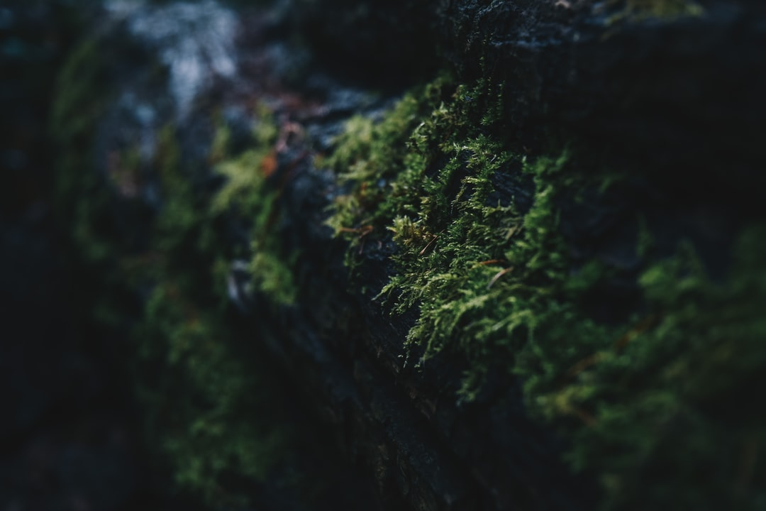 Close-Up Photography of Green Mosses On Wall - unsplash