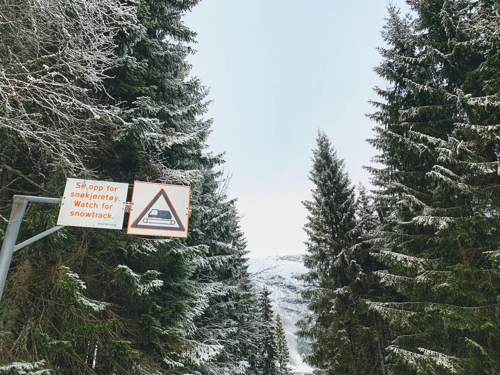 white road sign and snow-covered trees