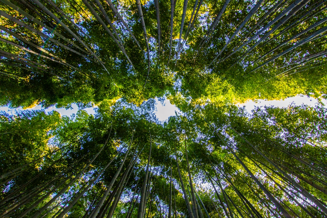 On top of the Bamboo Forest