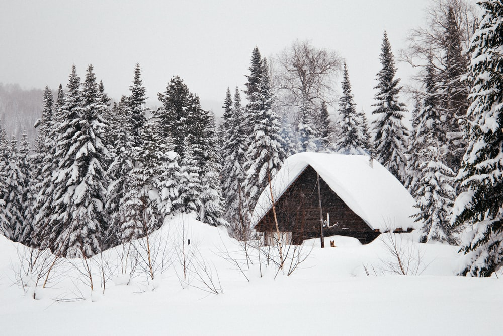 snow covered cabin near trees during daytime