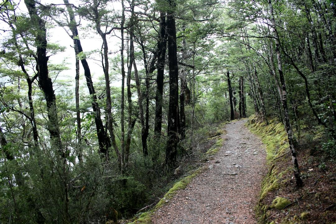 Nelson Lakes National Park, Aotearoa New Zealand