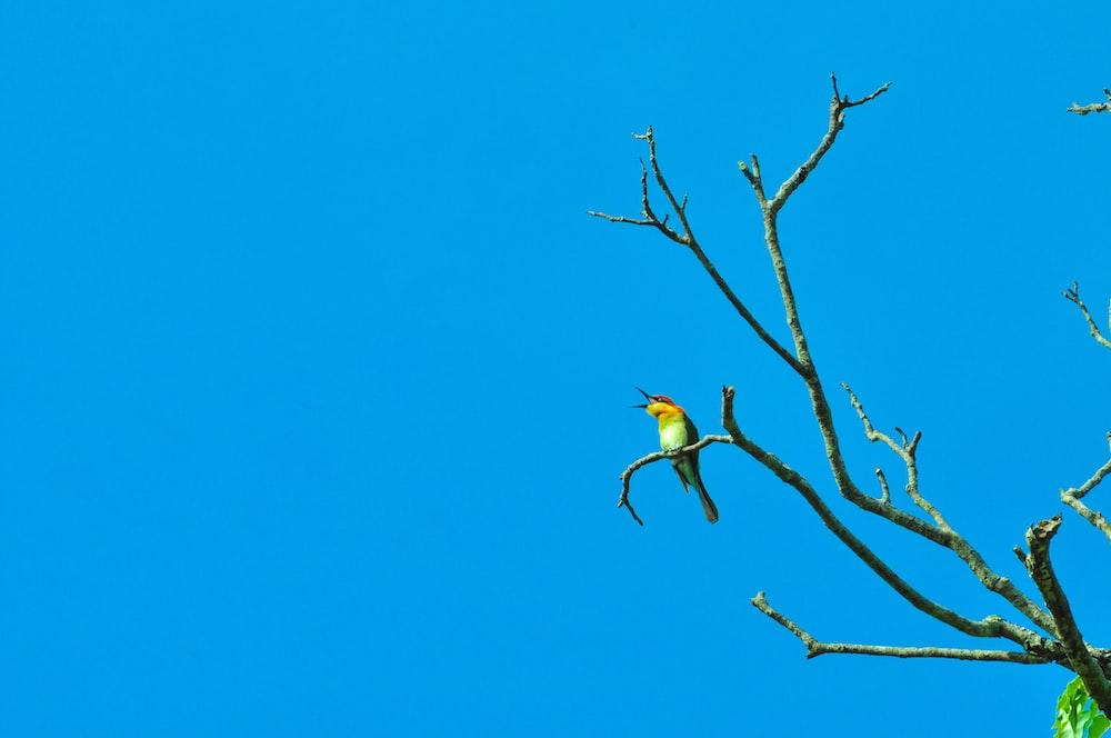green and yellow small-beaked bird on tree