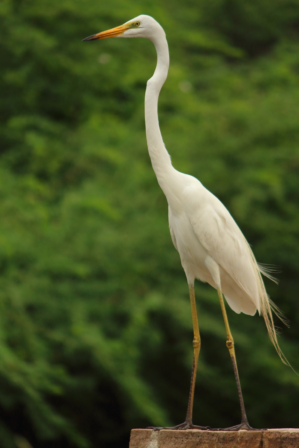selective focus photography of white long-necked bird during daytime