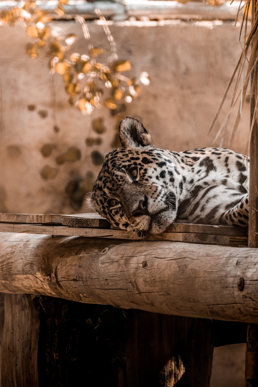 brown and black leopard on bed