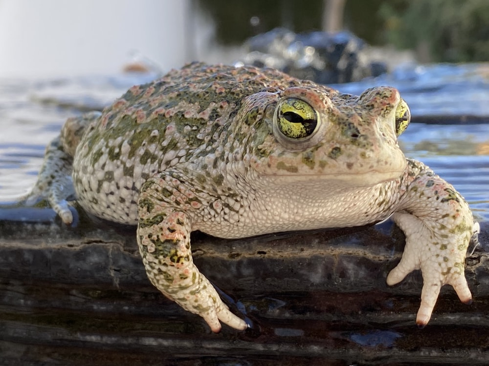 green and beige toad on gray surface