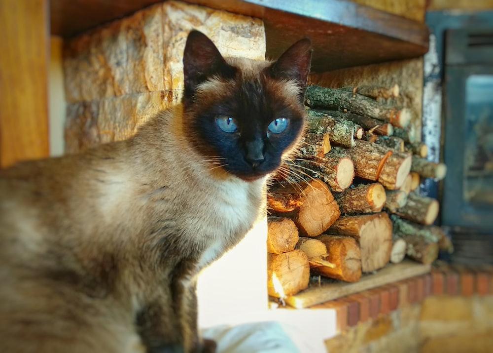 cat sitting beside firewood in organizer