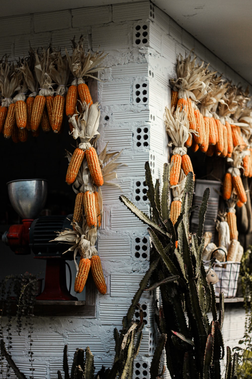 building decorated with corn beside cacti
