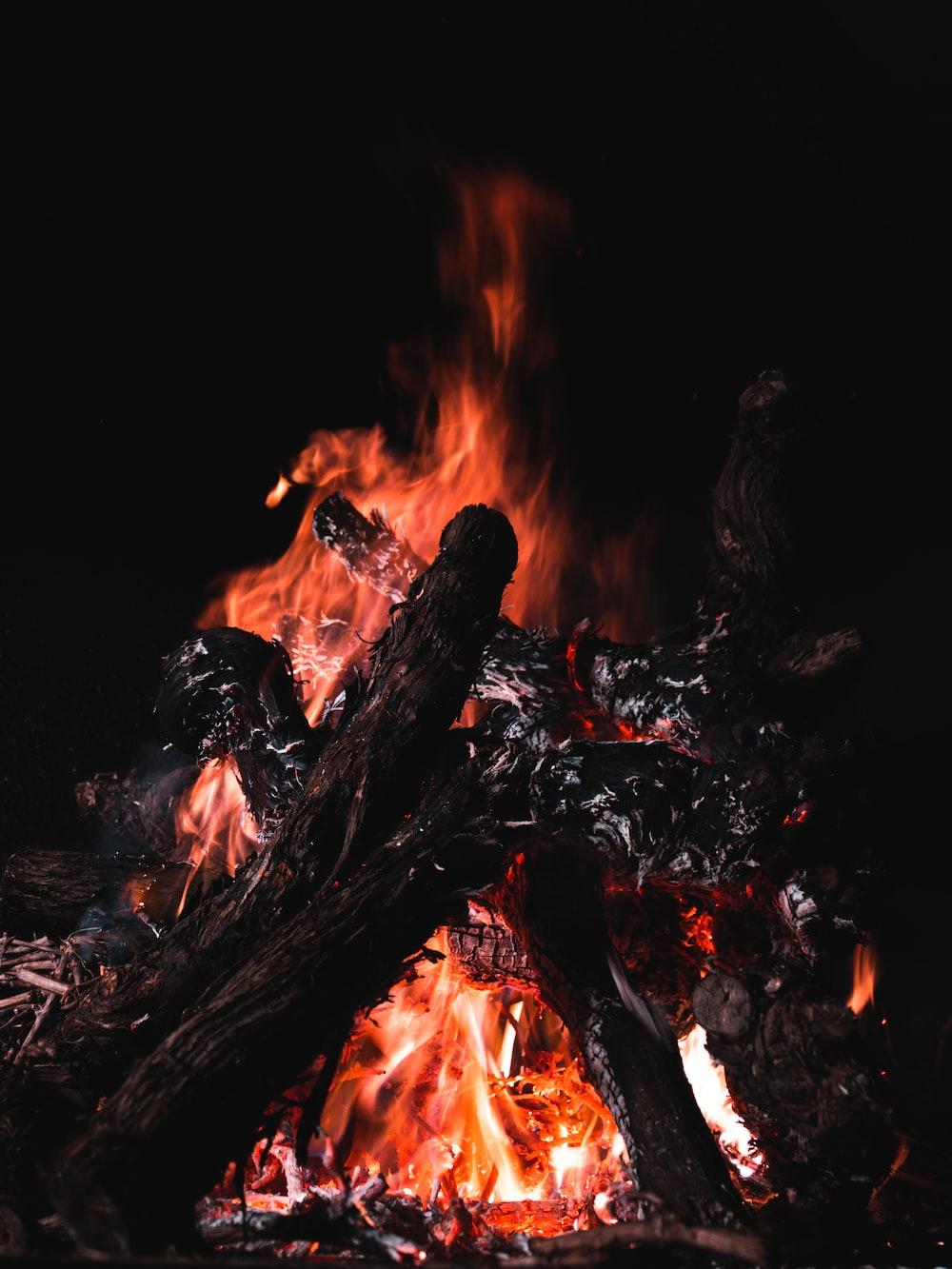 lit firewoods