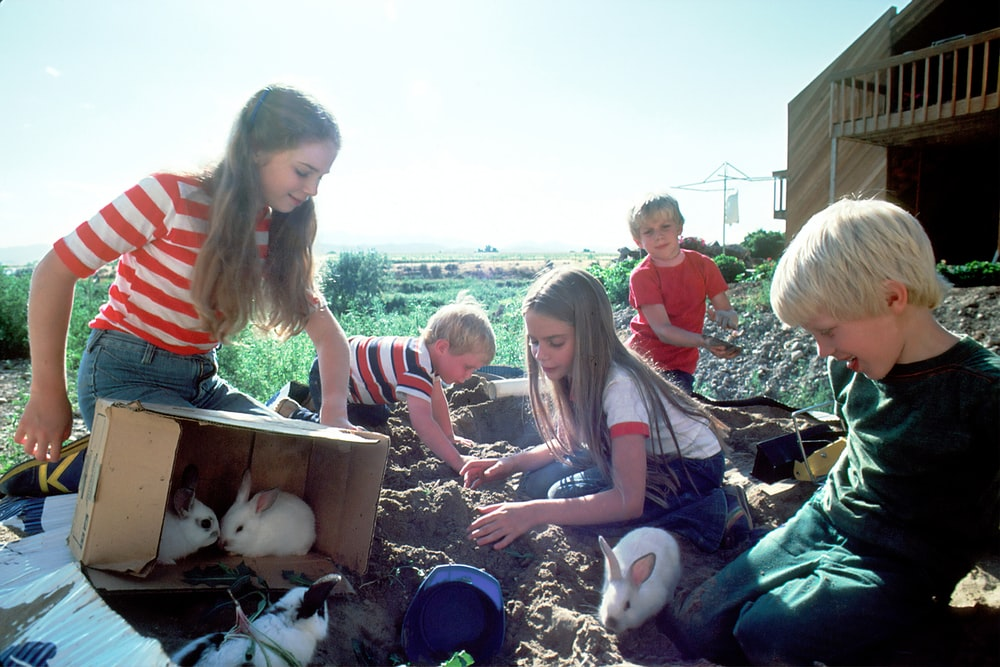 several rabbits near box