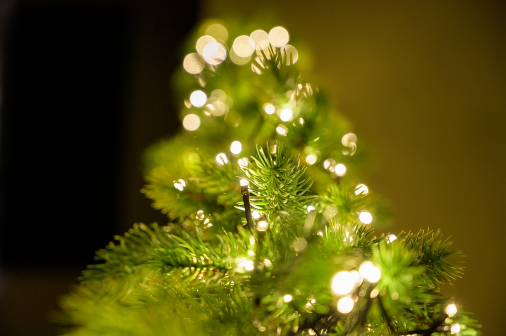 macro photography of green Christmas tree with string lights