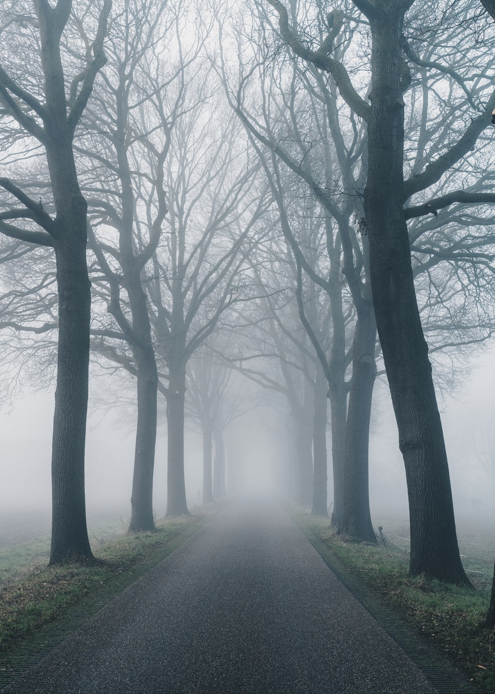 road surrounded with bare trees in foggy day