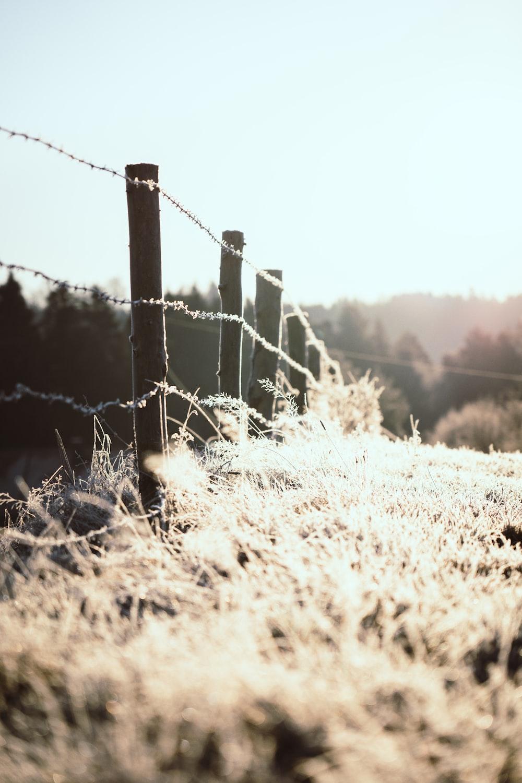 gray barbwire near field