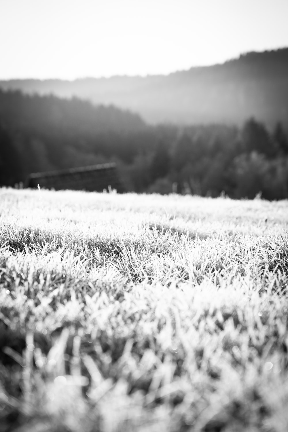 grayscale photography of field viewing trees