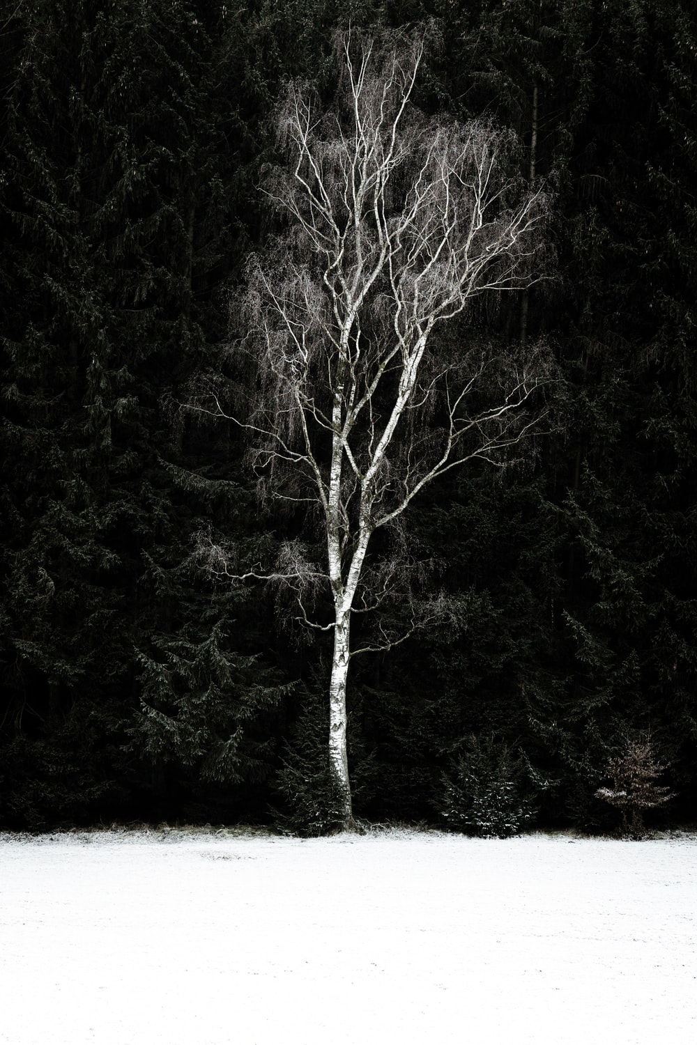 grayscale photography of bare tree near snowy field