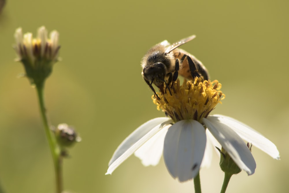 bee perched on flower