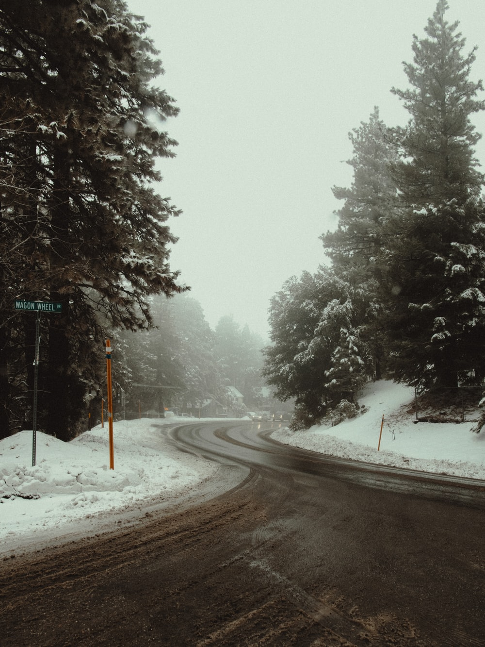 road in between trees covered with snow