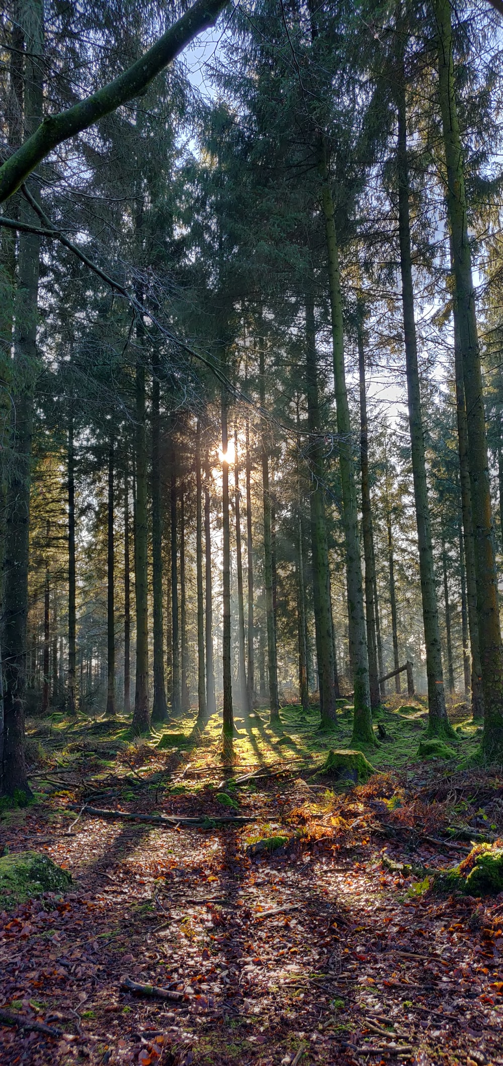 forest and sun ray light