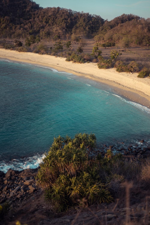 bird's-eye view of beach at daytime